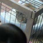 ゴン別荘で寝る猫1