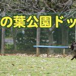 柏の葉公園ドッグラン